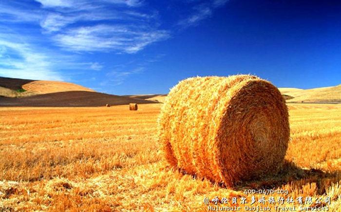 呼伦贝尔草原秋季风光