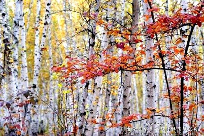 莫尔道嘎国家森林公园秋色