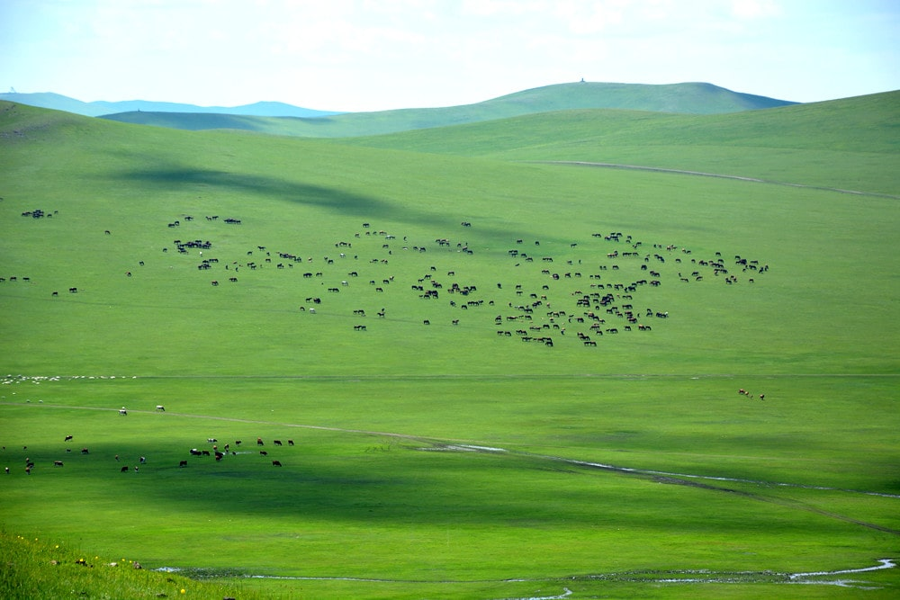 呼伦贝尔草原牧场